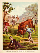 Harry Saves Rom from the Bull From the Book '  Sandford and Merton : in words of one syllable ' by Thomas Day, Mary Godolphin and Lucy Aikin, Published in New York by McLoughlin Brother's, Publishers