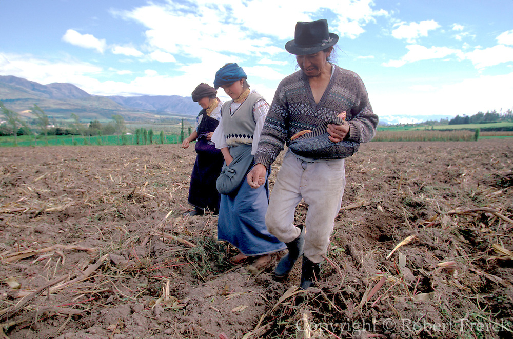 ECUADOR, HIGHLANDS NORTH OF QUITO farm family planting corn seed in freshly  plowed field near town of Cotacachi, north of Otavalo
