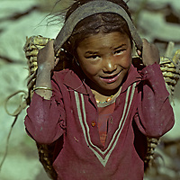 NEPAL, HIMALAYA. Young girl from Manang Valley gathers yak dung  for fuel in tumpline basket.