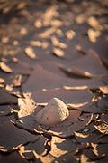 Close up of stone on dried up riverbed, Valle de la Luna, Atacama Desert, Chile