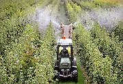 Nederland, Ooij, 14-9-2012Een tuinder spuit gewasbeschermingsmiddel op de peren die rijp zijn voor de oogst.Foto: Flip Franssen/Hollandse Hoogte