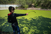 Young boy with stick with Algae on it in flood channel next to Silicon Beach in the Ballona Wetlands, Playa Vista, California, USA (MR)