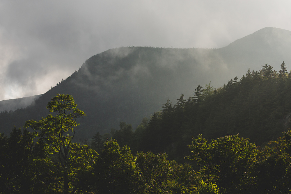 The mountain foliage of Pinkham Notch glistening during a summer storm.