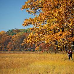 "A woman and her baby explore the edge of a New Hampshire salt marsh.  Oak trees.  Tidal marsh.  ""Massacre Marsh."" Rye, NH"