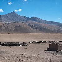 Captured distance view of the bolivian alpaka farm.