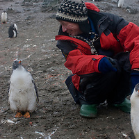 Enduring rain, photographer Gordon Wiltsie admires fearless gentoo penguin chicks on a beach on Aitcho Island, Antarctica.