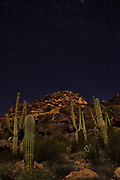 "Stars fill the sky above the Superstition Mountains, which are surrounded by saguaros (Carnegiea gigantea) in the Superstition Wilderness in Arizona. The saguaro is a large cactus noted for its ""arms"" that is native to the Sonoran Desert."