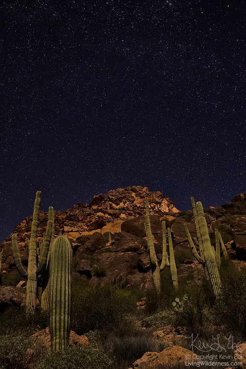 """Stars fill the sky above the Superstition Mountains, which are surrounded by saguaros (Carnegiea gigantea) in the Superstition Wilderness in Arizona. The saguaro is a large cactus noted for its """"arms"""" that is native to the Sonoran Desert."""