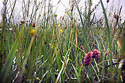 Nederland, Wageningen, 3-6-2008Grasland experiment Ossekamp van de Wageningen universiteit.Foto: Flip Franssen/Hollandse Hoogte