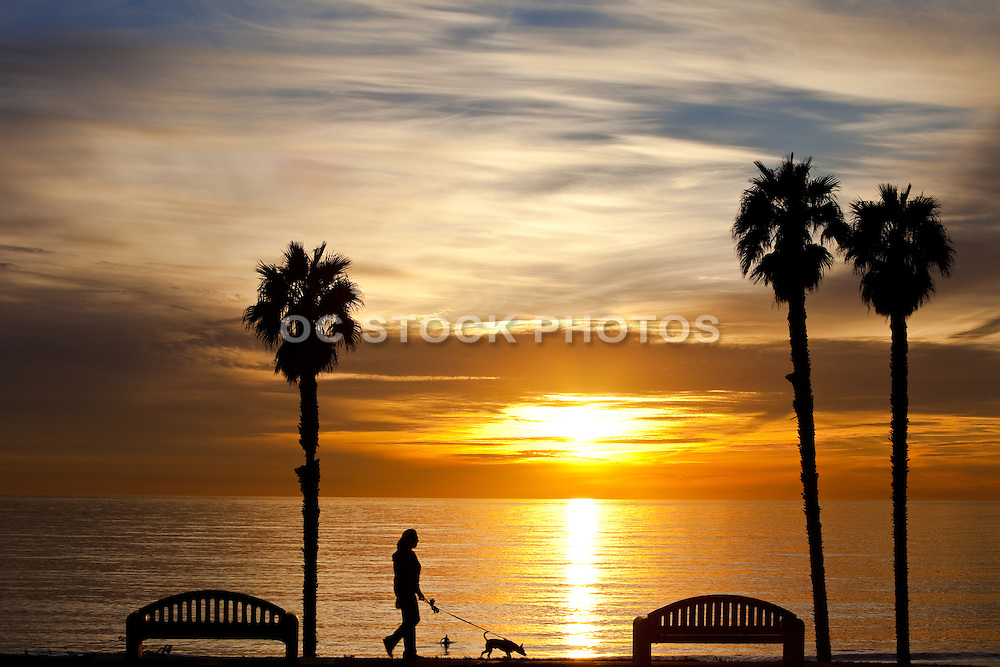 Taking The Dog For A Walk Along The Beach At Sunset