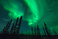 It was 2AM in the boreal forest outside of Fairbanks, Alaska. I had spent the last 6 hours waiting, driving around and dodging clouds. A faint green glow was visible in the far northern sky, but there was no movement. Still tired from my red eye flight, I was almost ready to call it a night. But patience pays off when aurora hunting. Finally the anticipated solar wind stream arrived. In a matter of minutes the aurora rapidly brightened as charged particles from the sun interacted with Earth's magnetic field. It doesn't matter how many times I've seen it, there's nothing else like watching an active display of the northern lights. The pulsing, flickering motion was similar to a campfire, filling the entire sky. It came from every direction, lighting up the ground enough to see. At times the speed exceeded my ability to capture it. Even a 1/2 second shutter speed blurred the fine details. After taking thousands of pictures that night, eventually I had to put my camera down and just stare upward in awe.