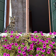 Cats in Venice   - Venice in Colours!<br /> <br /> HOW TO LICENCE THIS PICTURE: please contact us via e-mail at sales@xianpix.com or call our office in London +44 (0)207 1939846 for prices and terms of copyright. First Use Only ,Editorial Use Only, All repros payable, No Archiving.© MARCO SECCHI Cats in Venice