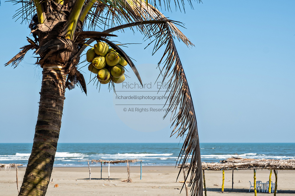 Palm frond palapas on Cabo Sagara beach at La Barra de Sontecomapan, Veracruz, Mexico. The lagoon which flows into the Gulf of Mexico is one of the best preserved coastal wetlands and mangroves forests in Mexico and part of the Los Tuxtlas biosphere reserve.