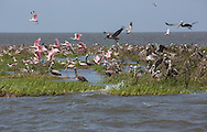 Bird rookery in Plaquemines Parish on a barrier island