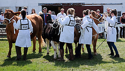 © Licensed to London News Pictures.16/07/15<br /> Harrogate, UK. <br /> <br /> Entrants hold onto their bulls during judging on the final day of the Great Yorkshire Show.  <br /> <br /> England's premier agricultural show has seen three days of showcasing the best in British farming and celebrating the countryside.<br /> <br /> The event which attracts over 130,000 visitors each year displays the cream of the country's livestock and offers numerous displays and events giving the chance for visitors to see many different countryside activities.<br /> <br /> Photo credit : Ian Forsyth/LNP