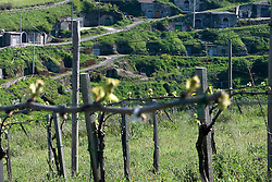 Barile (PZ) 21/04/2010 - Cantine di Barile dalla vigna Terra dei Re.