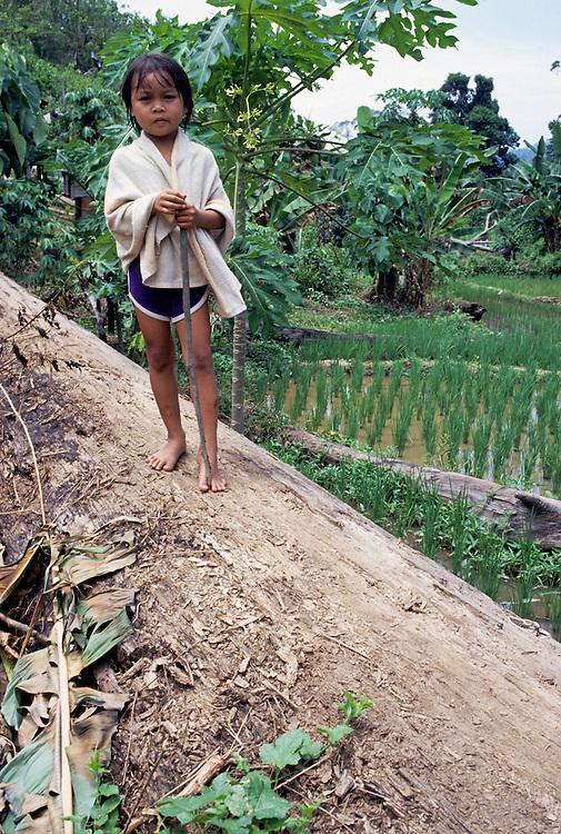 Young child standing on fallen tree in paddi field Borneo, Malaysia