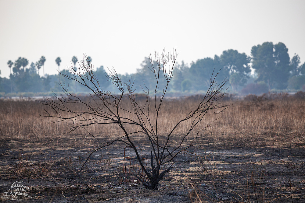 Burnt plants and shrubs from 2019 wildfire in the Sepulveda Basin Recreation Area, Los Angeles, California, USA