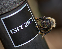 Bumblebee on a carbon fiber tripod. Wild basin trail in Rocky Mountain National Park. Image taken with a Nikon D2xs camera and 105 mm f/2.8 VR macro lens (ISO 100, 105 mm, f/5.6, 1/250 sec).