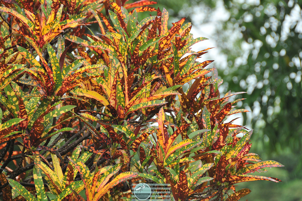Tight compositions of colorful leaves. Foliage varieties included colors of green, yellow, orange and red.