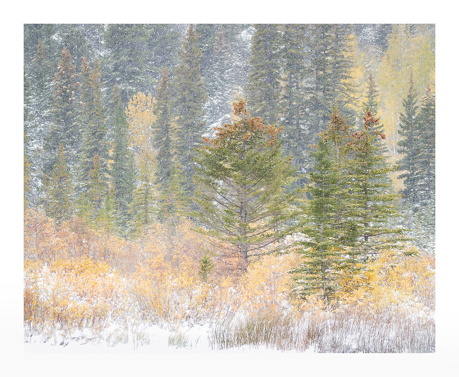 Autumn retreats as winter takes hold in Banff, Canada