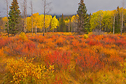 Autumn colrs at Hillside Meadows in the Bow Valley<br />
