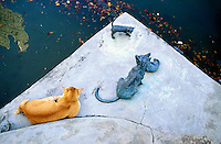 Cat on the bridge - Boat Quay and Busness center - Singapore