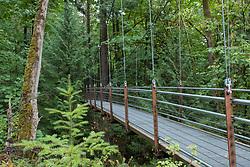 United States, Washington, Bellevue, Ravine Bridge at Bellevue Botanic Garden