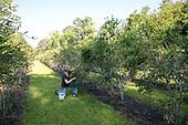 Sunhillow Berry Farm