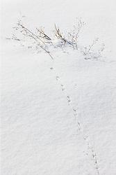 Abstract of frozen sticks and grasses, Trinity River Audubon Center, Dallas, Texas, USA.