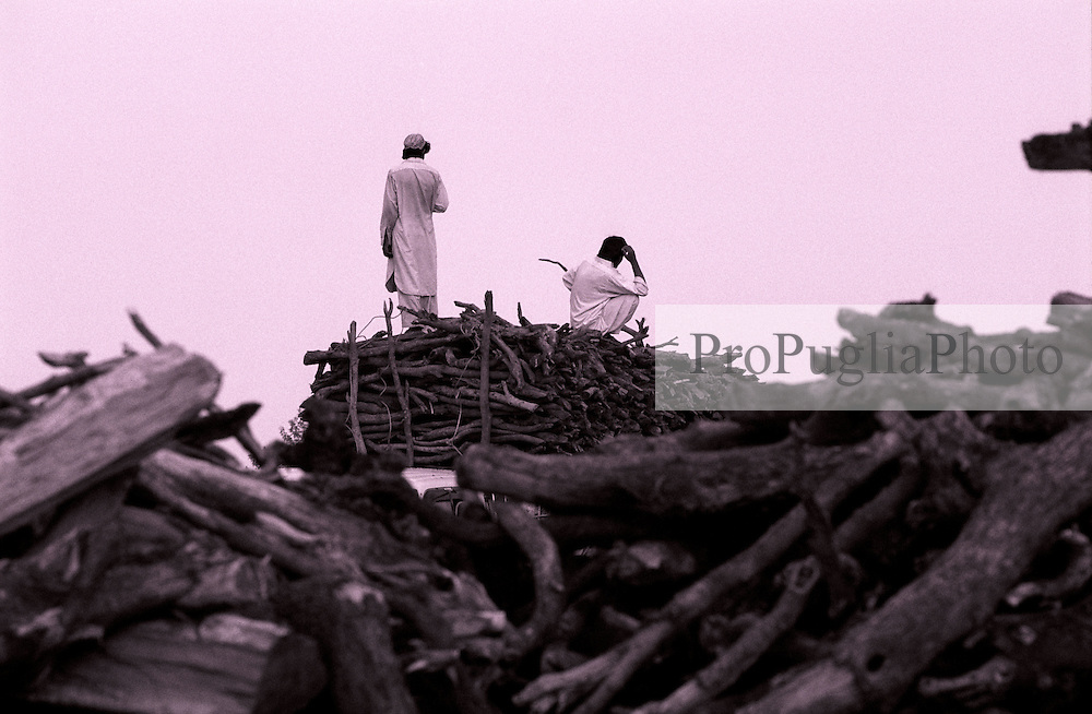 Large stock of firewood is cutted and sold in Khost