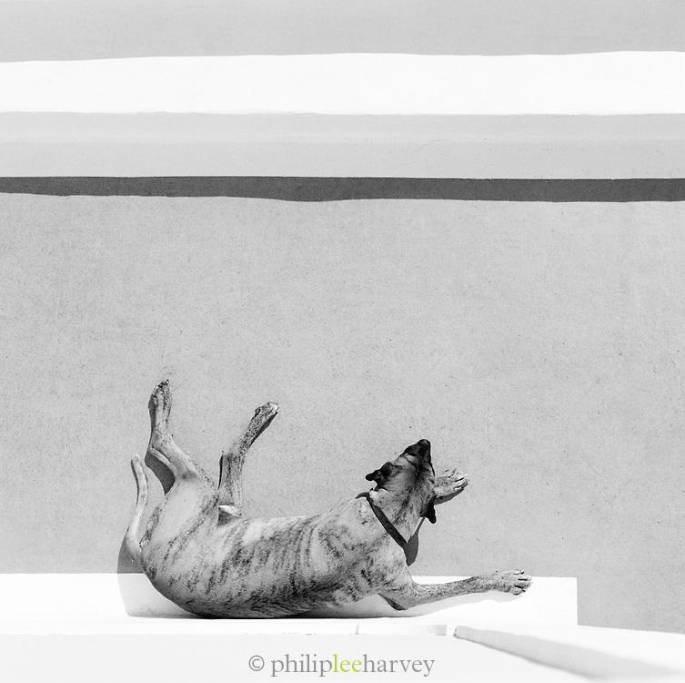 A sleepng dog at Hotel Raya, Panarea, Aeolian Islands, Italy