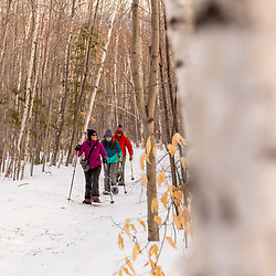 Snowshoeing in a forest of paper birch trees at Loon Echo Land Trust's Bald Pate Mountain Preserve in South Bridgton, Maine.