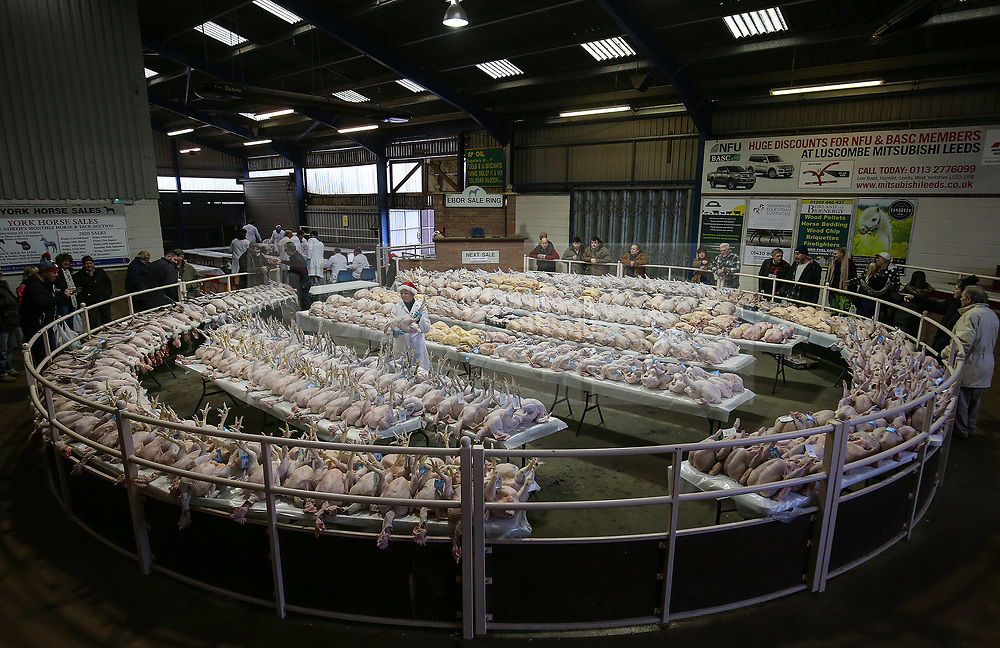 © Licensed to London News Pictures. 22/12/2019. York, UK. Buyers and sellers attend the York Auction Centre's Christmas Poultry Auction of dressed poultry in York, northern England, on December 22, 2019. The annual sale of dressed poultry features over 1000 birds including turkeys, geese, pheasants, partridge, ducks and chickens. . Photo credit: Nigel Roddis/LNP