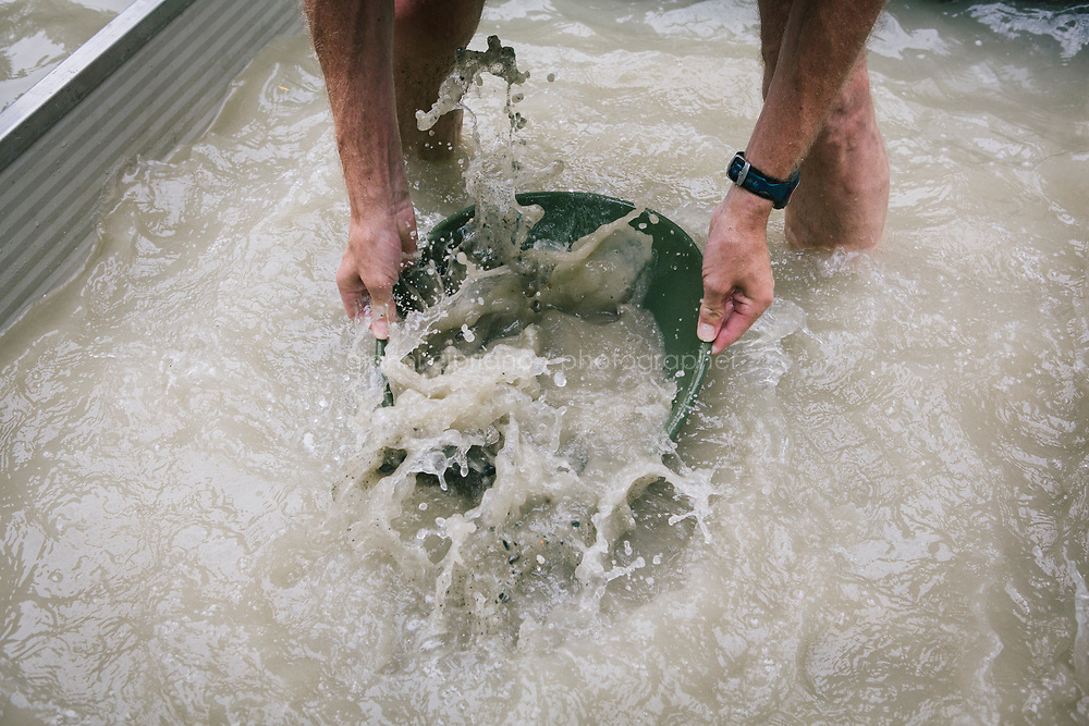 VERMOGNO (ZUBIENA), ITALY - 24 JUNE 2017: A gold panner is seen here gold panning with a tradition pan during the triathlon contest at the Victimula Gold Panner's Arena in the Bessa Natural Reserve in Vermogno (Zubiena), Italy, on June 24th 2017.<br /> <br /> Gold Panners from Italy, Switzerland, France, UK, US and Slovenia gathered in Vermogno (Zubiena) for the 36th Italian Gold Panning Championship.<br /> <br /> Gold panning is a form of placer mining and traditional mining that extracts gold from a placer deposit using a pan. The process is one of the simplest ways to extract gold, and is popular with geology enthusiasts especially because of its cheap cost and the relatively simple and easy process. Once a suitable placer deposit is located, some alluvial deposit are scooped into a pan, where it is then gently agitated in water and the gold sinks to the bottom of the pan. Materials with a low specific gravity are allowed to spill out of the pan, whereas materials with a higher specific gravity sink to the bottom of the sediment during agitation and remain within the pan for examination and collection by the prospector.