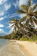 Palm trees on beach on Little Corn Island, Nicaragua