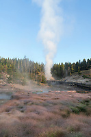 Steam risingf fron Dragon's Mouth at Mud Volcano area. Yellowstone National Park