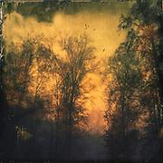sunrise through the morning fog - texturized photograph<br /> Prints: https://crated.com/art/107374/daybreak-by-dirkwustenhagen