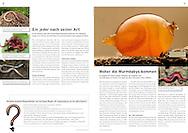 Publication: PRO NATURA MAGAZIN (Switzerland), March 2011, Photography by Heidi & Hans-Jürgen Koch/heidihanskoch.com