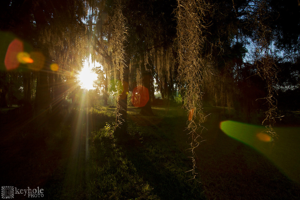 """Spanish Moss hangs from trees in a field where """"Castle Morgan"""" once stood in Old Cahawba Archaeological Park in Alabama. During the Civil War, the building served as a prison for 3,000 captured Union troops."""
