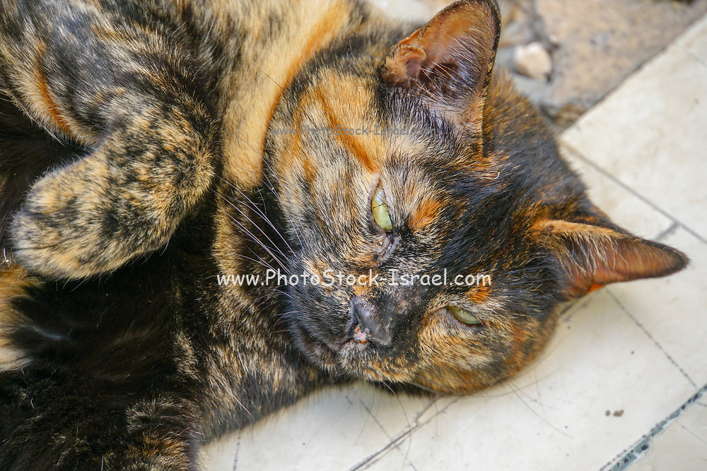 side view portrait of a cat's head lying on the floor