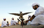 Young men rendezvous in the desert to train their falcons to hunt, whilst chatting and drinking Mint Tea, Abu Dhabi, UAE