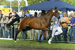 343-Unanda<br /> KWPN Paardendagen Ermelo 2004<br /> Photo © Hippo Foto