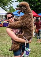 Pampered Poodle, Mounds Dog Fest 2015. Photo taken June 14, 2015, at Angell Park, Sun Prairie.