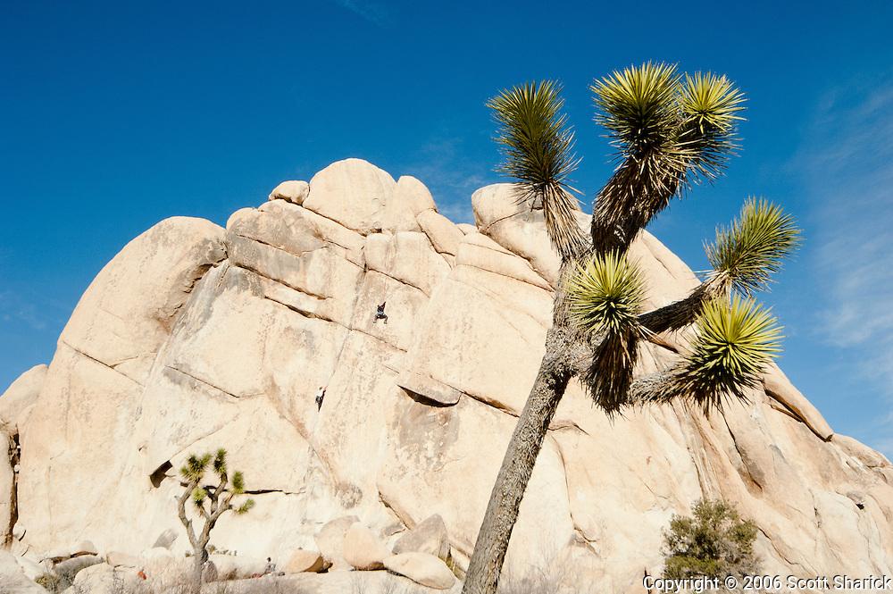Rock climbers take advantage of the rocky surroundings at Jashua Tree National Park in California