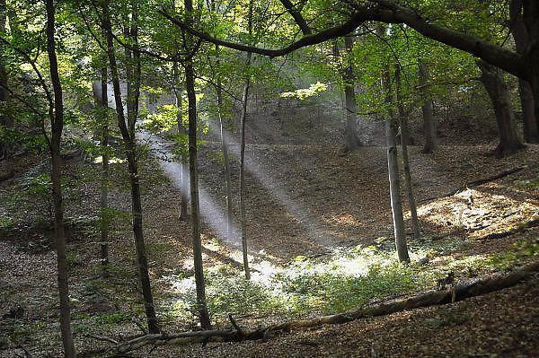 Nederland, Ubbergen, 13-10-2010Het was vandaag een dag met mooi herfstweer. Herfstbos. Heerlijkheid Beek. Geldersch landschap. Mooi weer, herfstlichtFoto: Flip Franssen/Hollandse Hoogte