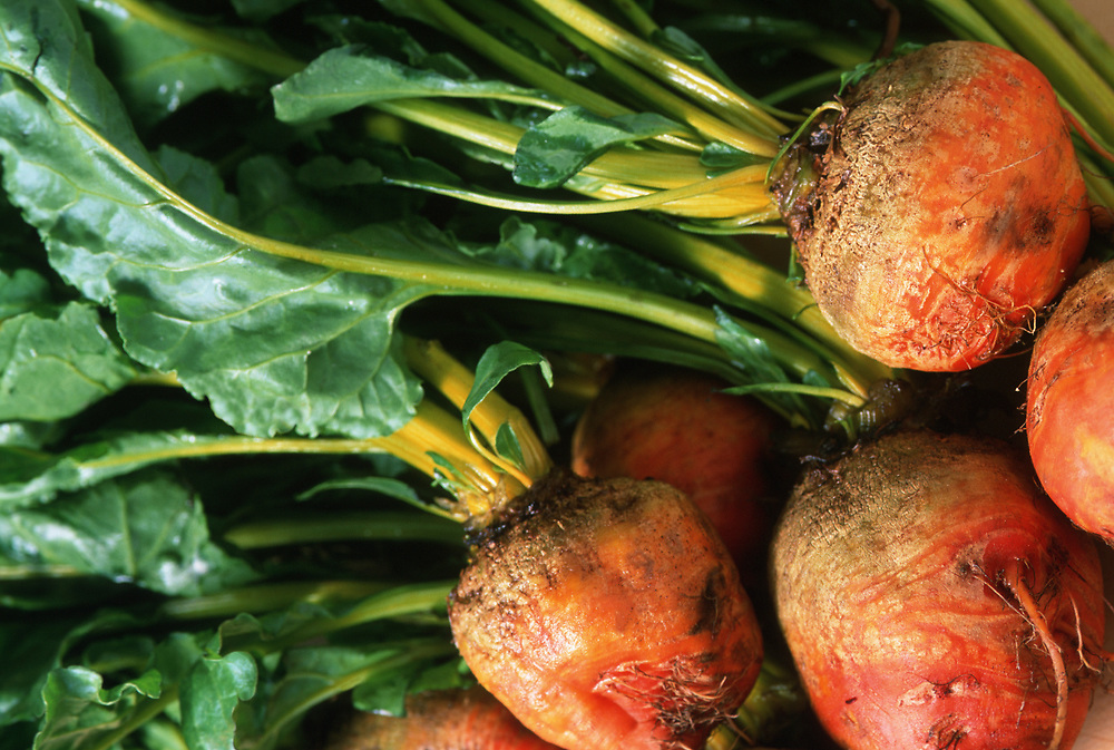 Close up selective focus photograph of raw Golden Beets with their stems