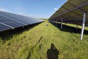 Nederland, the netherlands, 28-5-2018Zonnepark in de provincie Gelderland. Schapen houden het gras kort .Foto: Flip Franssen