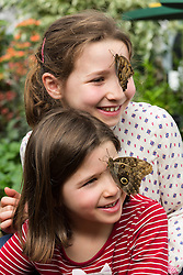 © Licensed to London News Pictures. 31/03/2015. London, UK. Sara and Eva Johnson with owl butterflies on their face at the Sensational Butterflies exhibition at the Natural History Museum in London. The Sensational butterflies exhibition runs at the Natural History Museum in London from 2 April 2015 to 13 September 2015. Photo credit : Vickie Flores/LNP