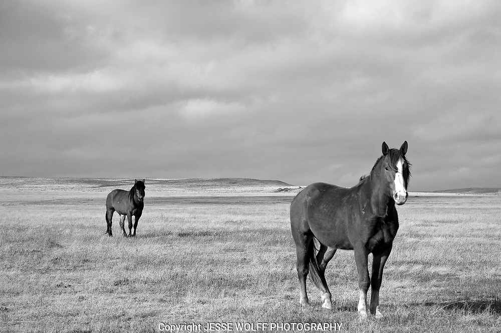 I was out in the middle NOWHERE in eastern Colorado when I came across these two characters...